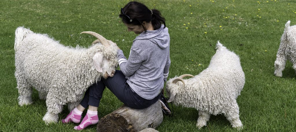 Angora goats and Alles Mooi